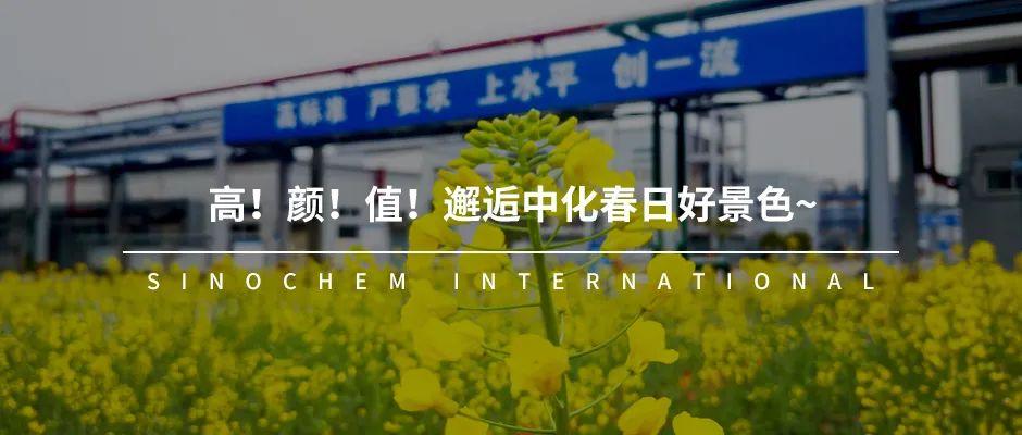 杨华:化工事业部要在两化重组过程中勇担重任